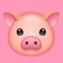 The Happy Pig Country